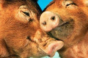 Állati ez a szerelem! Fotókon az állatvilág legcukibb szerelmespárjai