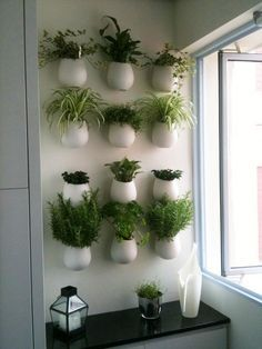Studio Floral Dora Santoro: Super Horta