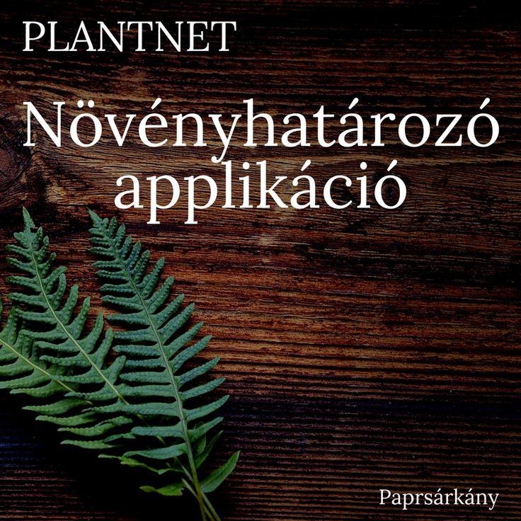 Növényhatározó applikáció