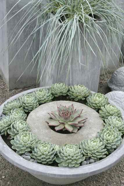 Succulent planters. Don't tell mom,but I snitches her jello mold ring to make this !