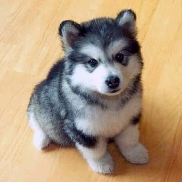 So cute. Too bad im not a dog person.