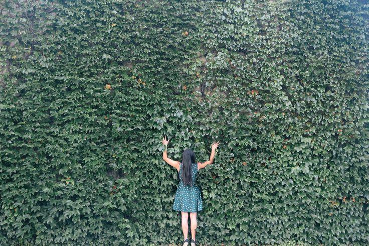[フリー画像素材] 人物, 女性, 後ろ姿, 人と風景, 植物, つる植物, 葉っぱ ID:201411250300