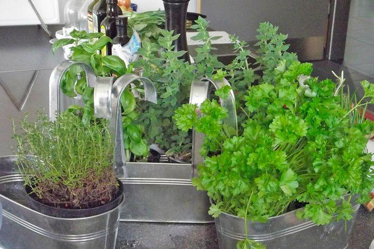 Mejores 33 im genes de herramientas y artefactos caseros - Plantar hierbas aromaticas ...