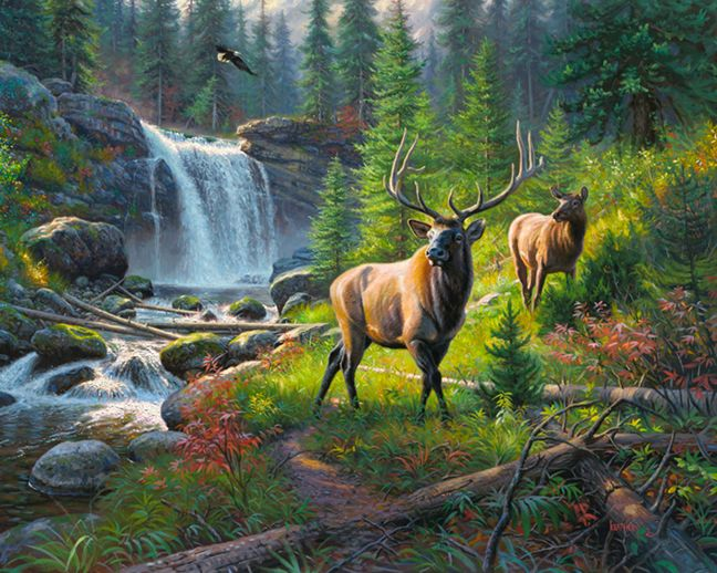 Thunder River by Mark Keathley ~ bull elk & cow waterfall forest