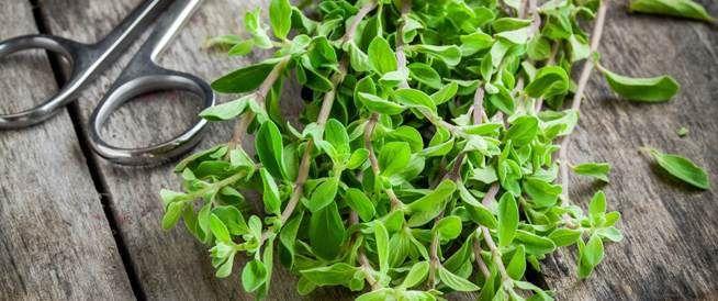فوائد البردقوش للحامل يعتبر عشب البردقوش من أفضل الأعشاب الموجودة في العصور القديمة و حتى في عصرنا هذا وهذا بفضل احتوائه على العديد من Herbs Marjoram Plants