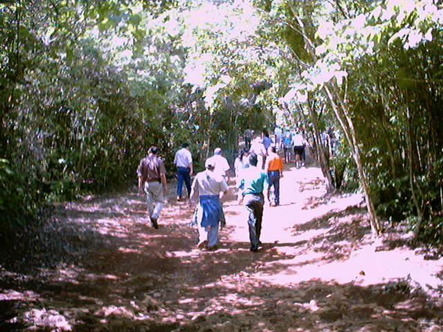 cenote day tour