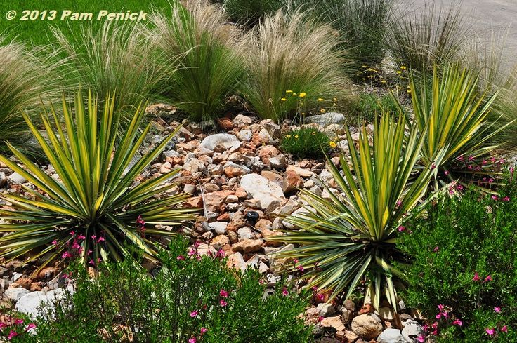 17 best ideas about south texas landscaping on pinterest