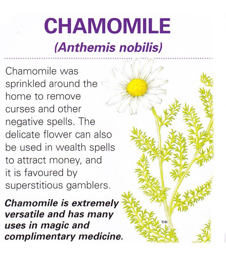 Magical flowers chamomile