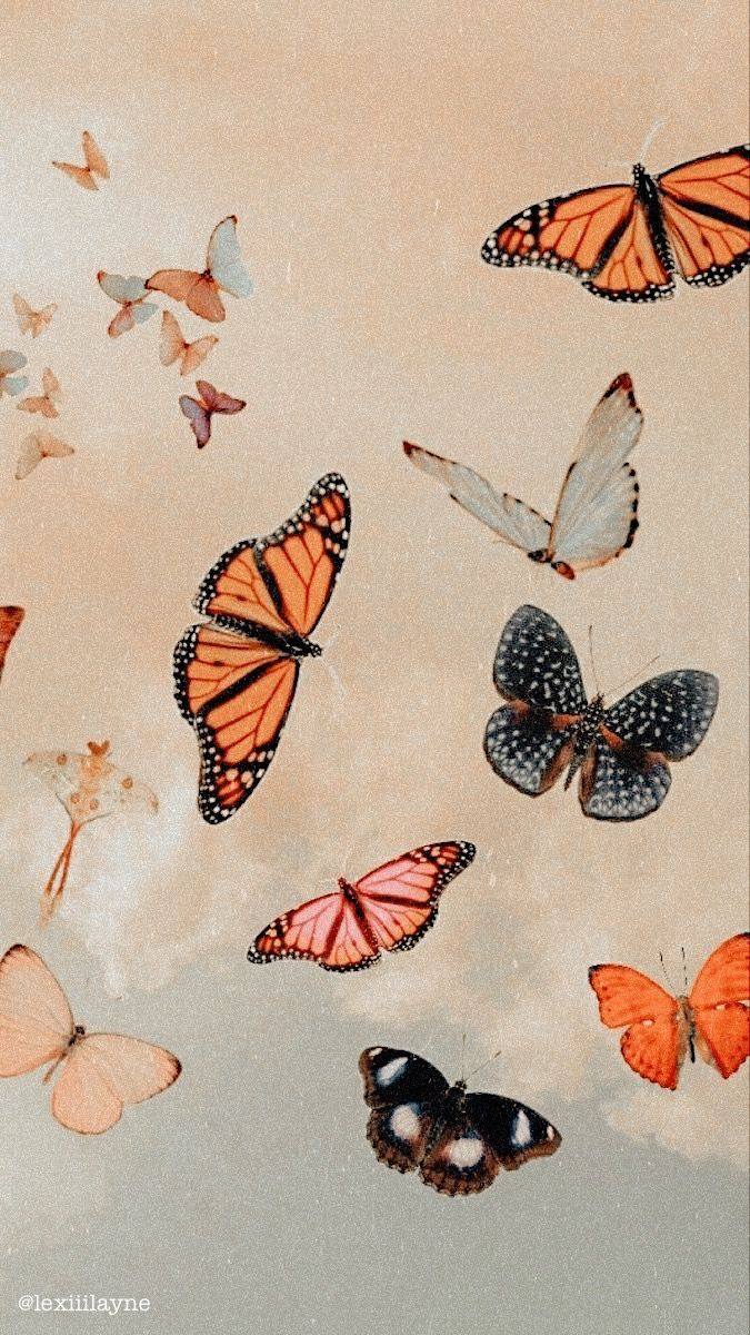 Pin by jules !! on other aesthetic in 2020 | Butterfly ...