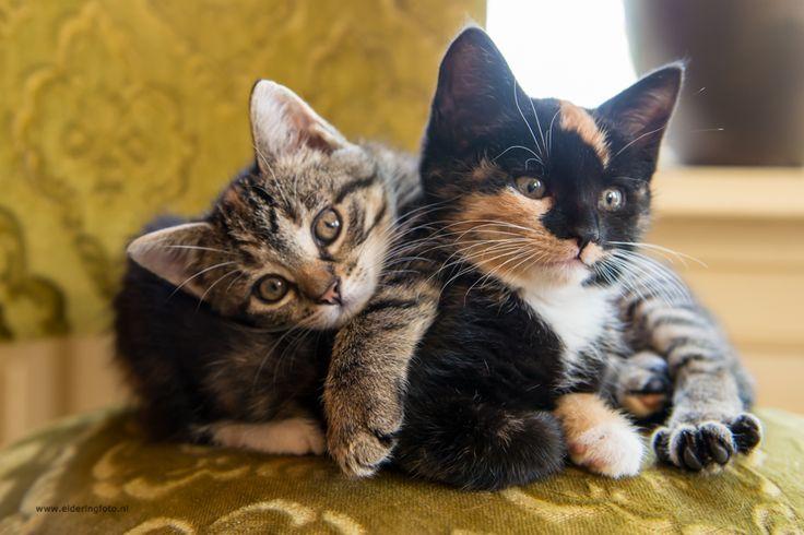 Kittens, sweet animals