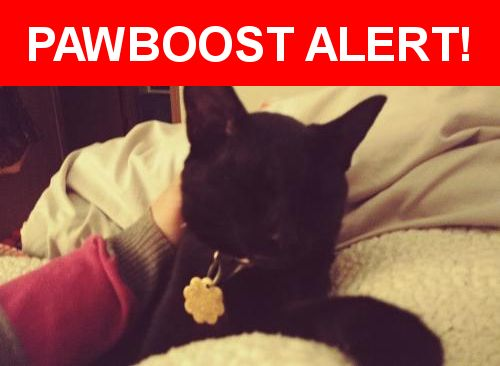 Please spread the word! Luna was last seen in Hudson, WI 54016.  Message from Owner: Luna is our kitty whom is indoor/ outdoor. She is super sweet and has a small white patch on her chest. She lives the woods and out side but she didn't come home last week, we saw her last Friday, but didn't get her inside and haven't seen her since. She hasn't been coming when I call or to the door like she always does. If you have seen her or know if someone has her; PLEASE CALL US.   We just want her home…