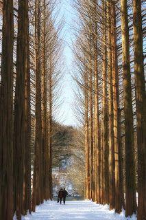 KOREA TRAVEL INFOMATION: [PROMOTION] Winter Season ~ Let's go to Nami Islan...