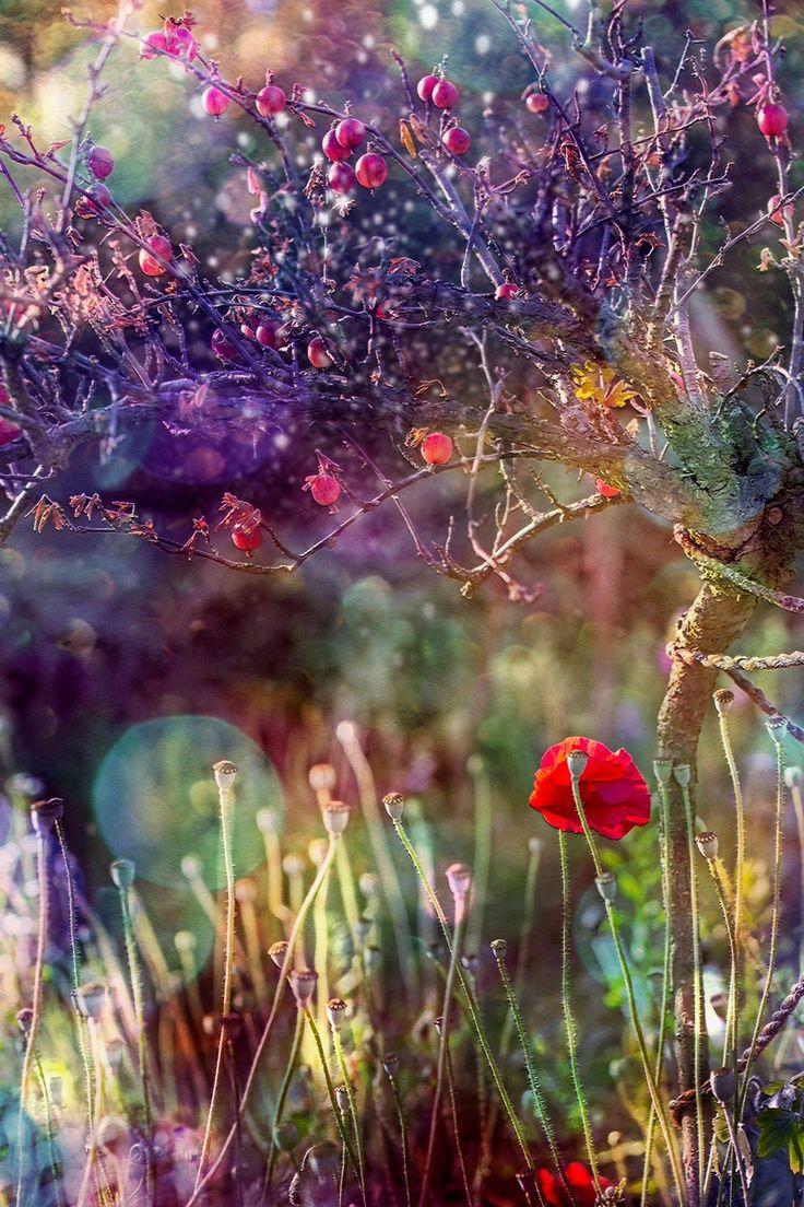 © Agnieszka Mlicka 2015This artwork come from my III creativity era - REBIRTH…