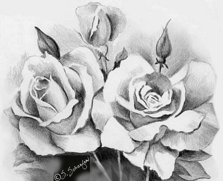 Beautiful rose flower bouquet for your loved ones valentine roses pencil art pinterest beautiful sketches flower bou