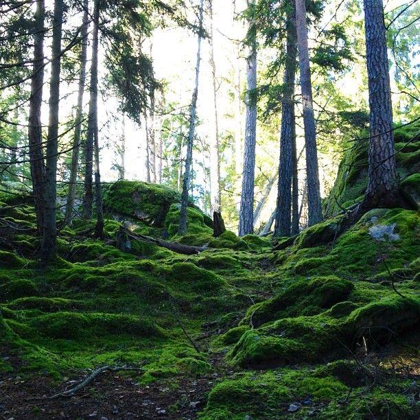 Tyresta National Park à Haninge Kommun, Storstockholm