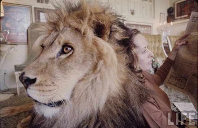 vintage everyday: Amazing Photographs Document a Teenager Melanie Griffith and Her Family Hanging Out with Their 'Pet' Lion in 1971
