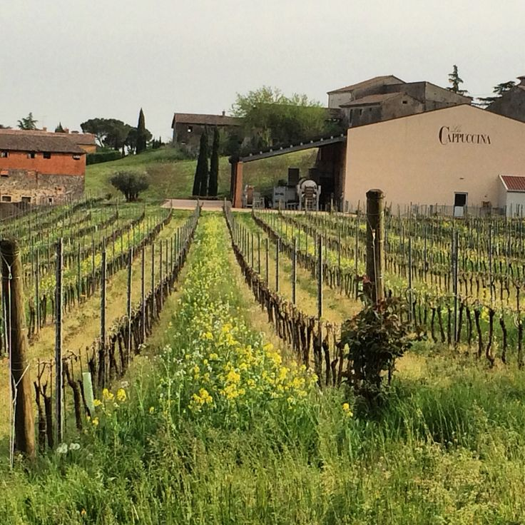 It's Spring time in the San Brizio vineyard, organically grown. www.lacappuccina.it