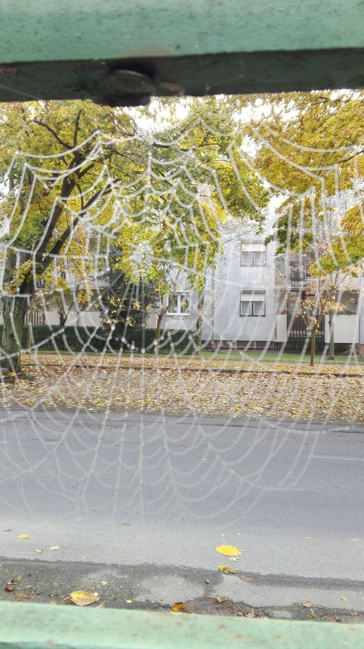 Pókháló,kert