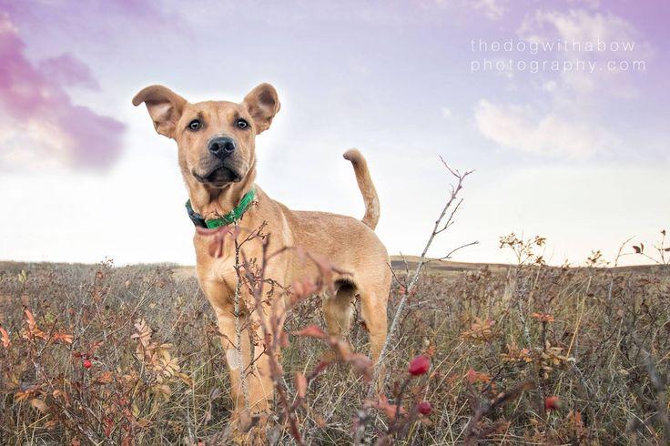 Adoption «  Underdogrescue.com