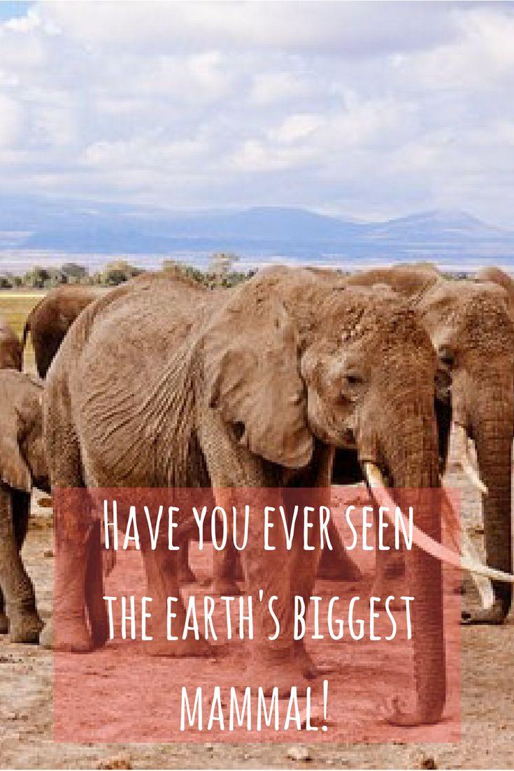 Have you ever experienced a real life Kenya safari?  #kenya