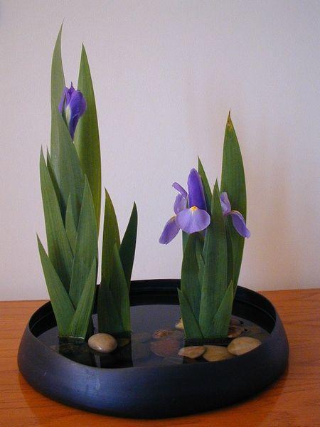 Iris em vaso                                                                                                                                                                                 Mais