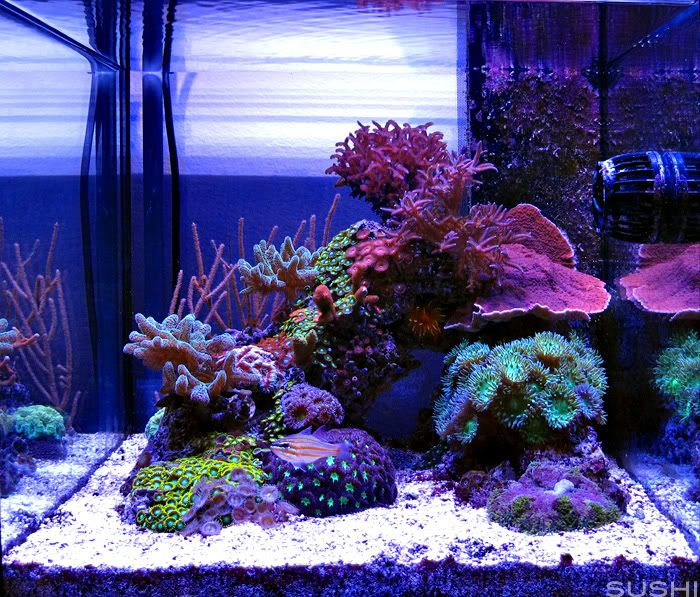 54 Best Images About Saltwater Aquarium. On Pinterest