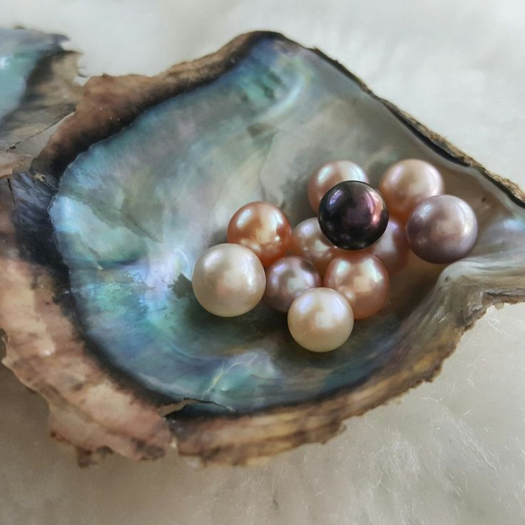 5 Open an Oyster With Pearls, Akoya Saltwater Oyster ...