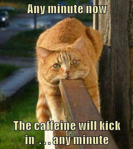 Funny Friday Coffee Meme : Best images about things that tickle me on pinterest