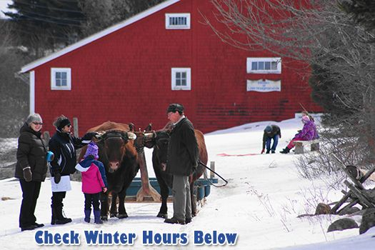 Winter on the Farm