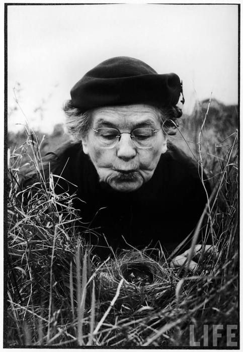 Al Fenn - Mrs. Margaret Morse Nice lying flat in the grass to study (and make kissy-faces at) a nest of baby Field Sparrows, Chicago, Illinois, 1956. From the LIFE magazine Photo Archive.