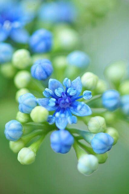Delicadas flores.