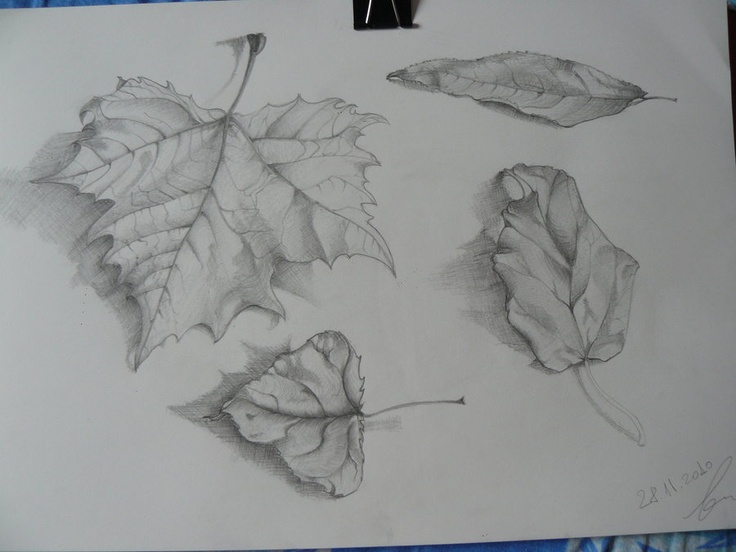 Drawing leafs