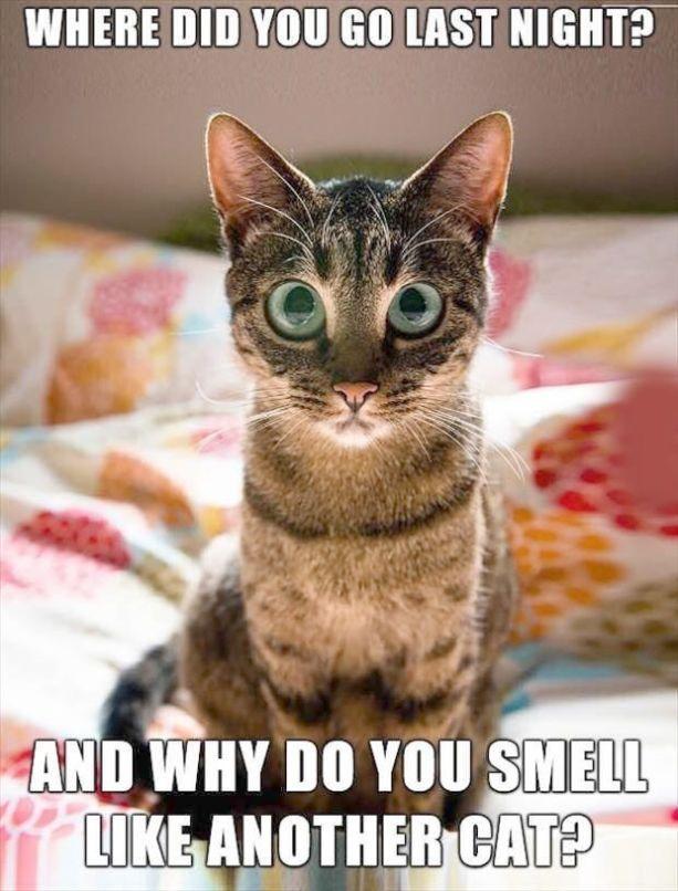 Kittens Magazine Kittens Cute Kittens Funny Animals Funny Cat