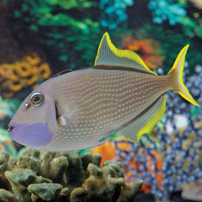17 best images about marine life on pinterest singapore for Live saltwater fish