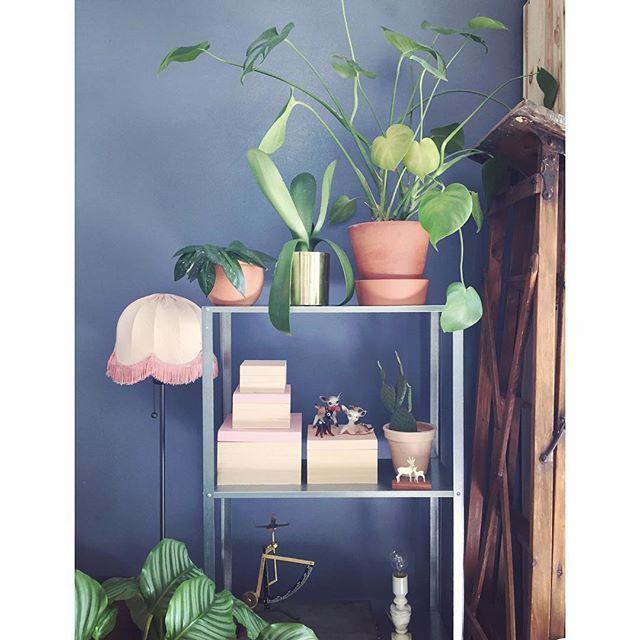 MonsteraMonday #marissjokoladefabrikk #boligplussminstil #boligpluss_lamper #boligpluss_planter #rom123stue #boligplussfarger #skonahem #plantsrule #plantlove #planter #monstera #monsteramonday #vindusblad #hyllis #granit #jotunkveldshimmel #interior #urbanjunglebloggers #indoorplants #industrialbeauty #industrialliving #stige #bruktfunn #loppis #calathea #hem_inspiration #bonytt #kkliving #boligmagasinetstylist2017 #plantsonblue
