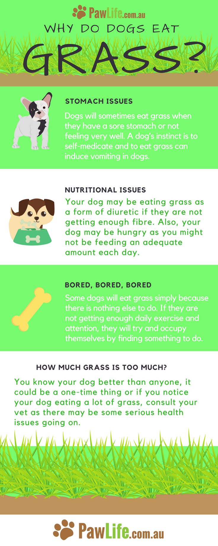 Top 25+ best Dog eating ideas on Pinterest | Canned dog food, Dog ...