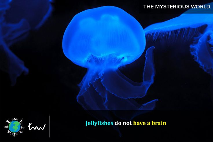 #fishes #jellyfish #facts