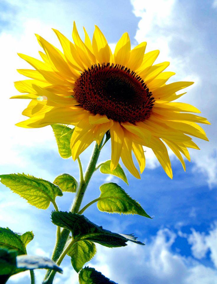 Какие цветы можно посадить в июне семенами клубнями или