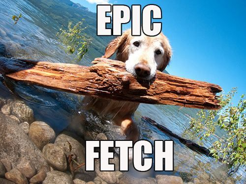 Epic fetchEpic Fetch, Puppies, Buckets Lists, Dogs, Epicfetch, Canine Companion, Back Yards, Animal Friends, Golden Retriever