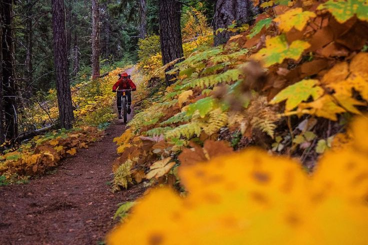"""from @jessehambley: """"A perfect weekend with vibrant fall colors, fresh snow and hero dirt!"""" #evoexplores"""