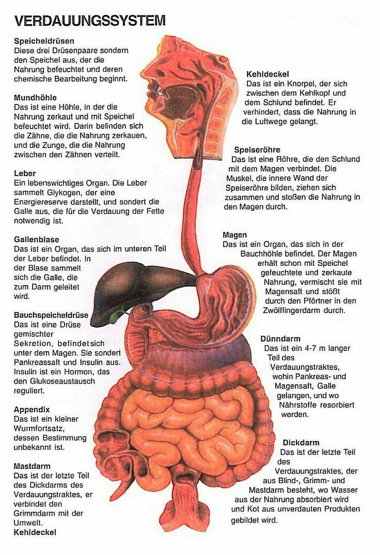 148 best Anatomie images on Pinterest