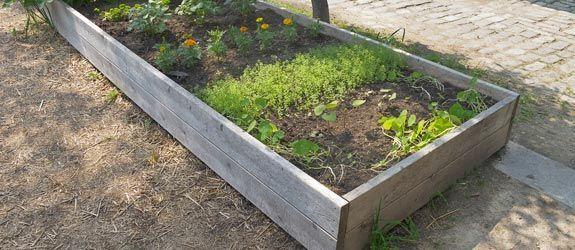 4 Home Vegetable Garden Ideas Types on a Budget Edible