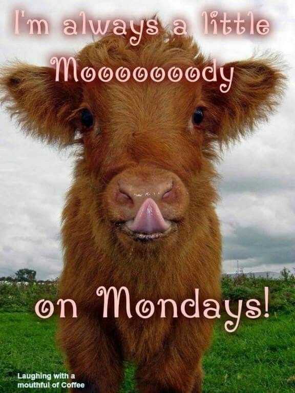 Mooooody?....that's me! (but the cute little tricksters help a lot)