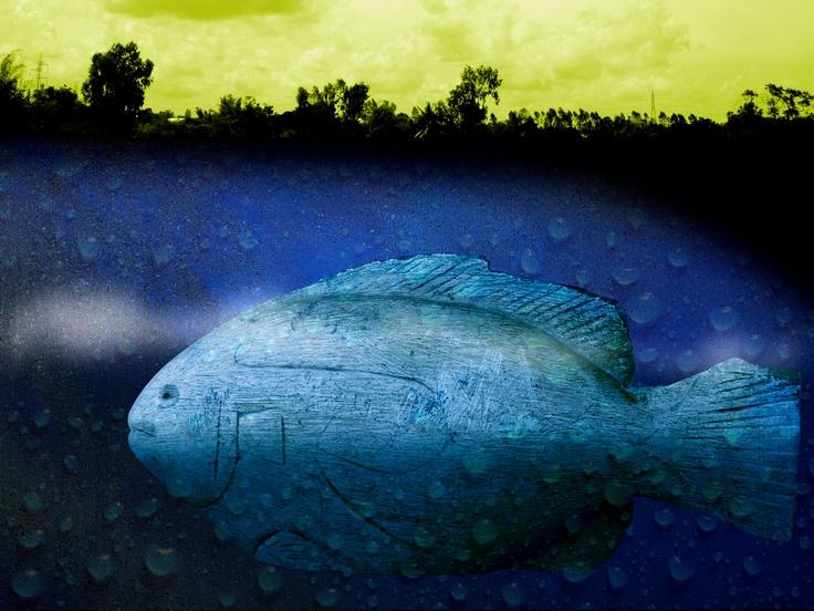 image editing - downstream migrant fish
