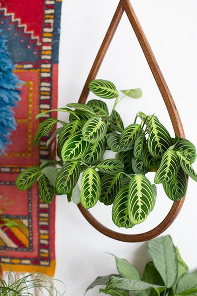 Patterned Plants In 2019 Decorating Ideas Apartment Plants