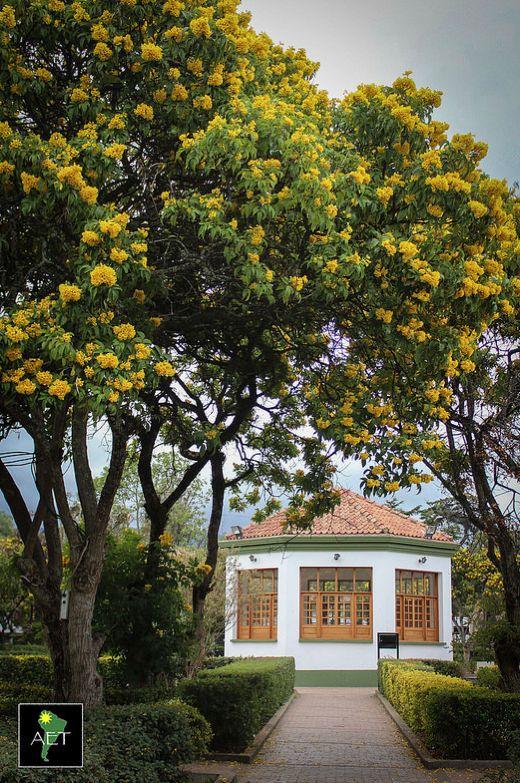 Springtime at the Subachoque town plaza  Subachoque, Colombia