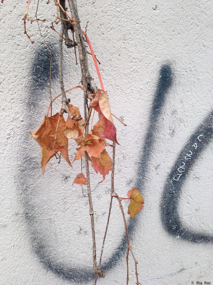 parolacce artistiche - quando ho visto quel muro sono rimasto affascinato per come la natura interagiva con le parole. Era una giornata grigia e non trovavo niente che valesse la pena di essere rappresentato, ma quel muro è stata una rivelazione...  (foto senza regolazioni)