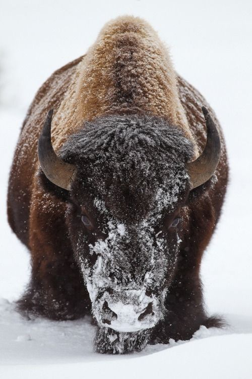 Head On (by Doug Dance Nature Photography)