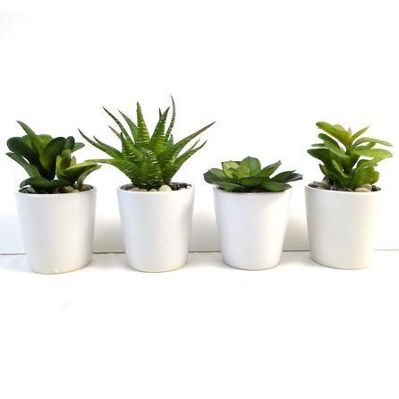 green succulent plant in ceramic pot dunelm home