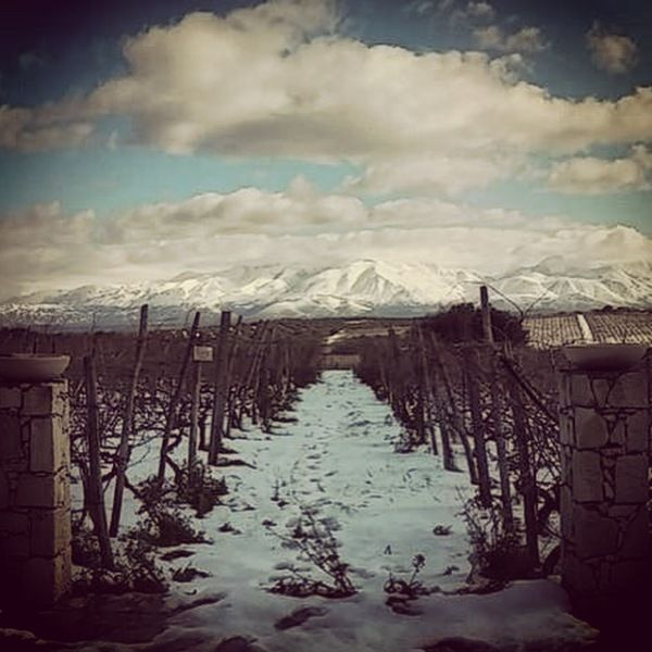 Snow in the vineyard (Plyto) and on Lasithiotika mountains! YouTube https://www.youtube.com/playlist?list=PLk8z0K3VDVCctNlHgUckRaINsAXR-VzxM Instagram http://instagram.com/lyrarakiswines Website http://www.lyrarakis.gr/ Twitter https://twitter.com/lyrarakis LinkedIn https://www.linkedin.com/company/lyrarakis-wines TripAdvisor http://www.tripadvisor.com/Attraction_Review-g189417-d2632334-Reviews-Lyrarakis_Winery-Heraklion_Crete.html Facebook Page https://www.facebook.com/LyrarakisWines
